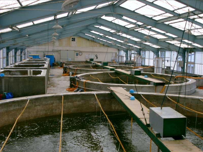 臭氧发生器对水产养鱼的2个好处